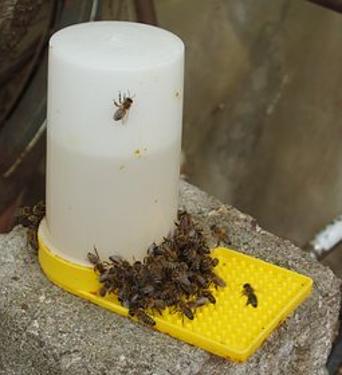Leau et les abeilles-2.png
