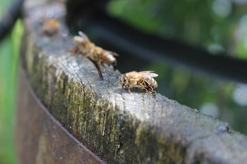 Leau et les abeilles-4.png